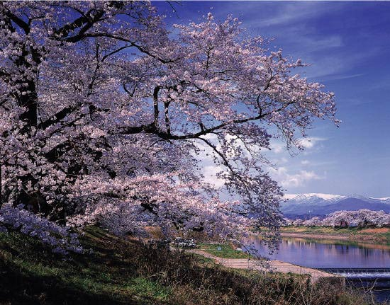http://daisuki-hoshi.cowblog.fr/images/Divers/562321101521660262065421392328928n.png